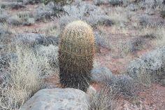 drleesangwon님의 포토스트림Zion Canyon Cactus in Jan 2014 www.koreapediatrics.com