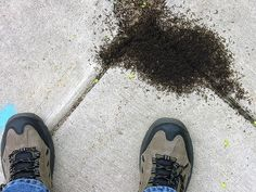 How to Kill Ants Without Pesticides