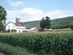 Amish in PA