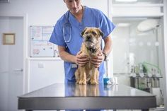 Here are the questions you should ask your vet the next time you bring your pet for a checkup.
