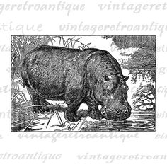 This high quality hippopotamus illustration artwork available in a variety of sizes and formats, including a clear background version to make it easy to use in just about any project!  ˷˷˷˷˷˷˷˷˷˷˷˷˷˷˷˷˷˷˷˷˷˷˷˷˷˷˷˷˷˷˷˷˷˷˷˷˷˷˷˷˷˷˷˷˷˷˷˷˷  ☑  : This listing is for DIGITAL ART that will be emailed to you instantly.       Add to your cart $10 or more and use coupon code SAVE10PLUS to get 10% OFF!  Add to your cart $20 or more and use c...