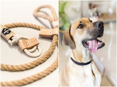 I Love Pretoria: Pact Dogs - Quality handmade leather goods for your best f...