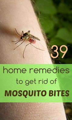 39 Superb Home Remedies to Get Rid of Mosquito Bites https://www.homeremedyhacks.com/39-superb-home-remedies-to-get-rid-of-mosquito-bites #Mosquito #MosquitoBites