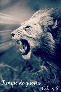 No desesperes TODO tiene su tiempo, Él peleara por ti.  Ecle. 3:8 tiempo de guerra, y tiempo de paz.