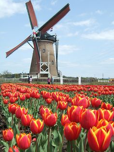 Netherlands - Have you already been in #Netherlands? Isn't it wonderful? http://circleme.com/items/netherlands--2