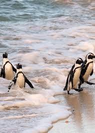 Image result for st kilda beach penguins