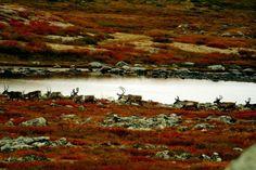 #autumn #son #bahar #güz #kırmızı #turuncu #yapraklar #red #yellow