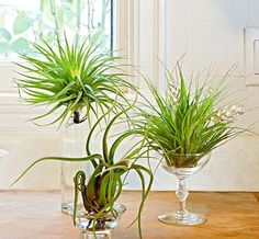 Decorate Your Home With Airplants