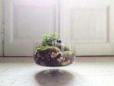 Boule de Vert | YYELLOW MAGAZINE