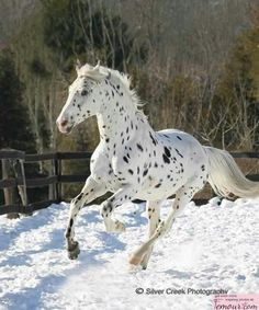 Ohhhhhhhh....... this will top the best in a horse wild show, I would want a horse like that!
