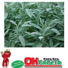 Shop for Broadleaf Sage Seeds by the Packet or Pound.Com offers Hundreds of Seed Varieties, Including the Finest and Freshest Broadleaf Sage Seeds Anywhere. Healing Herbs, Medicinal Plants, Healing Spells, Natural Medicine, Herbal Medicine, Natural Cures, Natural Healing, Natural Skin, Herbal Remedies