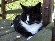 Het mooiste katje van heel Ieper... Ons Kadeetje.