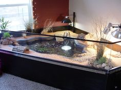 Indoor turtle pond.  Perfect for my turtle and my outside in theme.  Definitely would incorporate running water