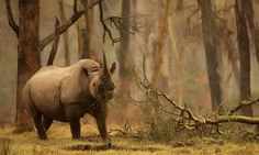 Wildlife Photographer of the Year - Cerca con Google