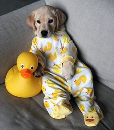 Any dogs and puppies that are cute. See more ideas about Cute Dogs, Cute puppies Tags: Super Cute Puppies, Baby Animals Super Cute, Cute Baby Dogs, Cute Little Puppies, Cute Funny Dogs, Cute Dogs And Puppies, Cute Little Animals, Cute Funny Animals, Doggies