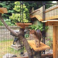 Easy DIY Cat Enclosure to keep your indoor cats happy and safe #indoorcatsdiy #catsdiyenclosure