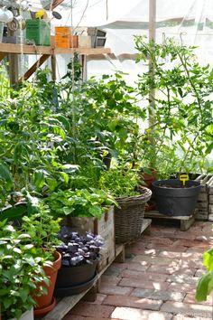 Garden Pool, Indoor Garden, Indoor Plants, Outdoor Gardens, Greenhouse Shed, Greenhouse Gardening, Growing Plants, Growing Vegetables, Garden Cottage