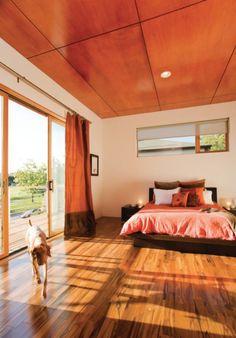 Orange Bedroom Plus dog