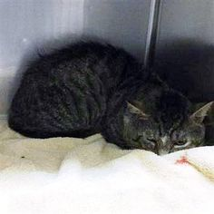 Crossposting to save lives: Robert: Feral beauty is running out of time at Concord kill shelter
