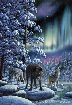 arctic colour