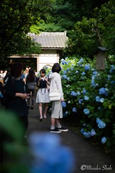 "Meigetsuin, Kamakura-City, Kanagawa-Prefecture, Japan. Helios 44m-4 58mm f/2, Sony α7ⅱ June 2016 鎌倉・明月院 Helios 44m-4 58mm f/2, Sony α7ⅱ 2016年6月撮影 [mapsmarker marker=""385""]"