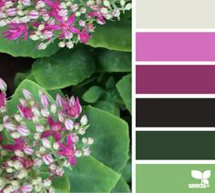 Light grey for the walls with the brights pinks as accent with green for a guest room Colour Pallette, Color Palate, Colour Schemes, Color Patterns, Color Combos, Design Seeds, World Of Color, Color Of Life, Pantone