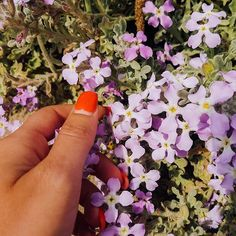 """""""You're only here for a short visit. And be sure to smell the flowers along the way"""" - Walter Hagen Carpe Diem, Don't Worry, How To Dry Basil, Flower Power, Mindset, No Worries, Natural Beauty, Herbs"""