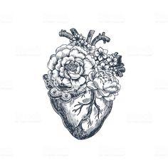 Anatomical Flower Heart… Royalty Free Cli… - Indispensable address of art- Tattoo Anatomy Vintage Illustration. Tattoos Motive, Maori Tattoos, Body Art Tattoos, Tattoo Drawings, Small Tattoos, Sleeve Tattoos, Tatoos, Tattoo Art, Heart Drawings