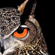 Eagle Owl - Artwork by Tiffany Mootrey.