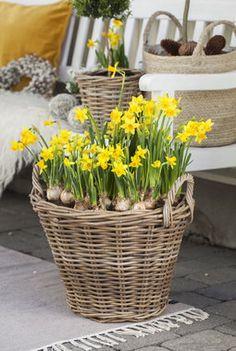 Balcony, Flower Arrangements, Flowers, Plants, Floral Arrangements, Balconies, Plant, Royal Icing Flowers, Flower