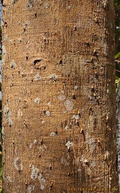 Tre bark texture - http://thetextureclub.com/wood/tre-bark-texture-2