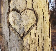 Heart In Nature, Insects, Animals, Animales, Animaux, Animal, Animais