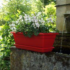 Des géraniums blanc à petites fleurs se marient bien a une jardinière au coloris vif (rouge, rose, bleu...)Poetic Jardin » Jardinières : votre jardin miniature.