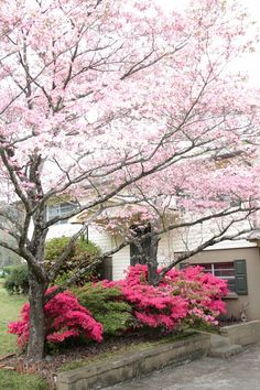 pink dogwood for curb appeal