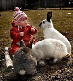 If you are searching for a furry friend that is not just extremely cute, but simple to keep, then look no further than a pet rabbit. Giant Rabbit, Giant Bunny, Big Bunny, Pet Rabbit, Cute Bunny, Rabbit Art, Animals For Kids, Baby Animals, Funny Animals