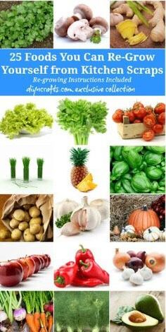 25 Foods That You Can Regrow From Kitchen Scraps