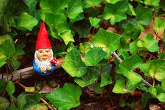 the garden gnome in his natural habitat by Tara Anderson on flickr