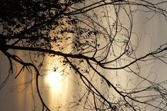 Sun Dawn, Trees, Celestial, Sunset, Outdoor, Sunsets, Outdoors, Tree Structure, Wood