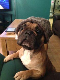 "dogsandpupsdaily: "" - French Bulldog. Want more? Follow:http://dogsandpupsdaily.tumblr.com/ "" #buldog"