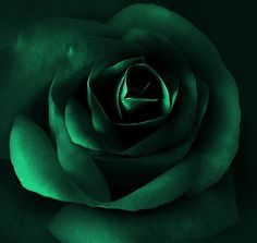 Emerald Color Rose