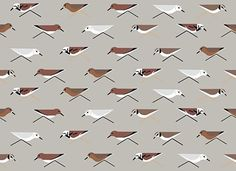 Birch Fabrics Charley Harper, Maritime, Sanderlings
