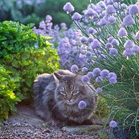 Stopping Cats in the Garden
