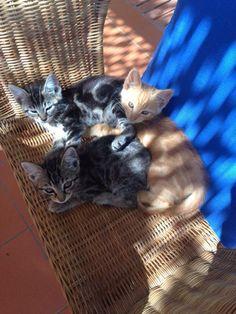 ....i tre moschettieri!!! di Punta Corvo😻😻😻