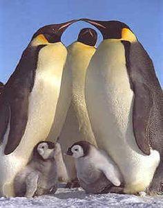 Adorable Penguin love and snow animals! | Animals Zone