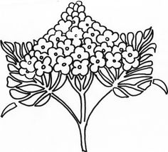 flower Page Printable Coloring Sheets | Syringa Lilac Flower coloring page | Super Coloring