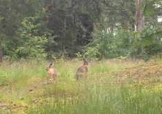 chasing rabbits 1