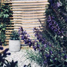 MOE of Sweden - Här är det massor av härligt lila blommor, salvia, rosmarin, dragon, lavendel mm. Sjösten (svart/vit i mellanstorlek)