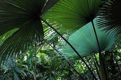 Pálmafélék betegsége és kártevői Plant Leaves, Plants, Plant, Planets