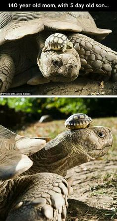 140-year-old mom with five-day-old son.