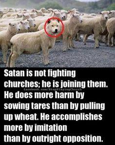 """""""""""Beware of false prophets who come to you in sheep's clothing but inwardly are ravaging wolves."""" Matthew ~The Bible Christian Life, Christian Quotes, Christian Posters, Faith Quotes, Bible Quotes, 5 Solas, Bible Truth, Moral, Bible Scriptures"""